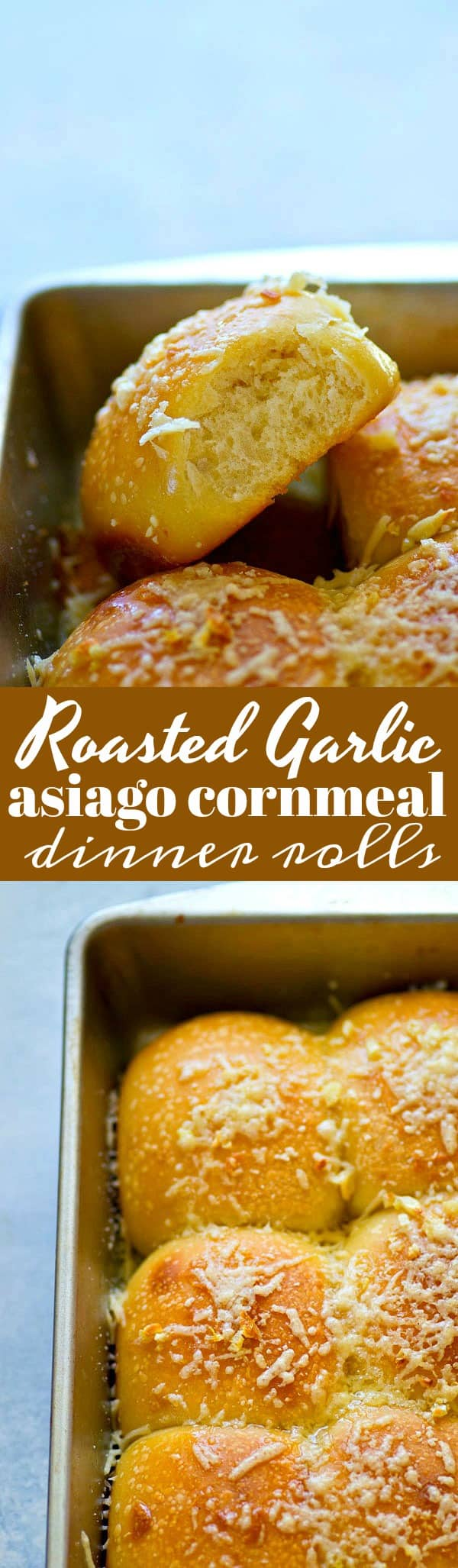 Sharp asiago cheese and flavorful roasted garlic are the perfect duo in these SUPER soft asiago cornmeal dinner rolls! Fill your holiday bread baskets with these winners.